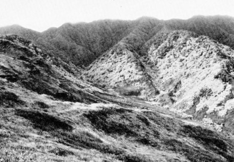 The head of Wailupe Valley on Oahu showing on the right the silvery foliage of groves of the kukui-Hall