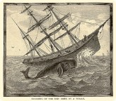 The sinking of the Essex was the inspiration for Melville's Moby-Dick