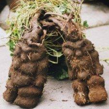 Ti Root