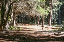Waihou_Spring_Trail