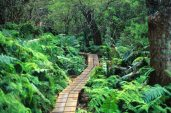 Boardwalk, Waikamoi Preserve, East Maui