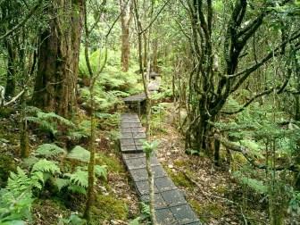 Waikamoi Preserve Boardwalk