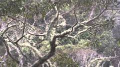 Waikamoi-Maui