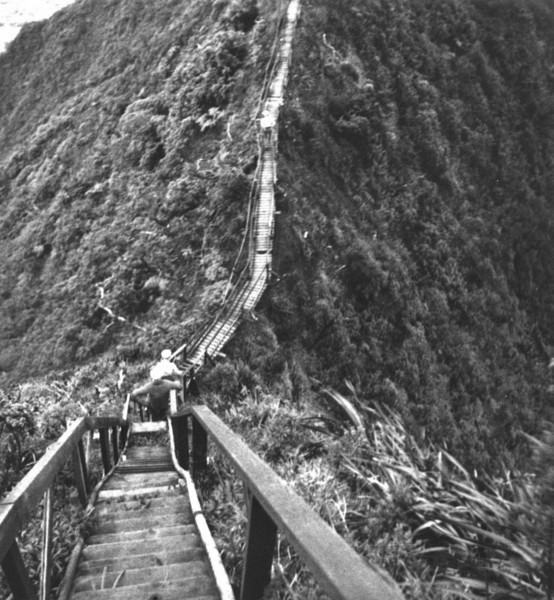 Wooden_Ladder-cliff_falls_away_on_each_side-(DavidJessup)-