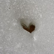 adventure-journal-hearts-in-nature-leafe-ice-Giannis-Pitarokilis