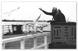 feeding-gulls-400