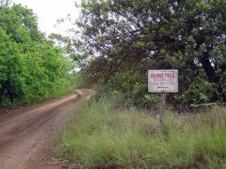 munro-trail-on-lanai