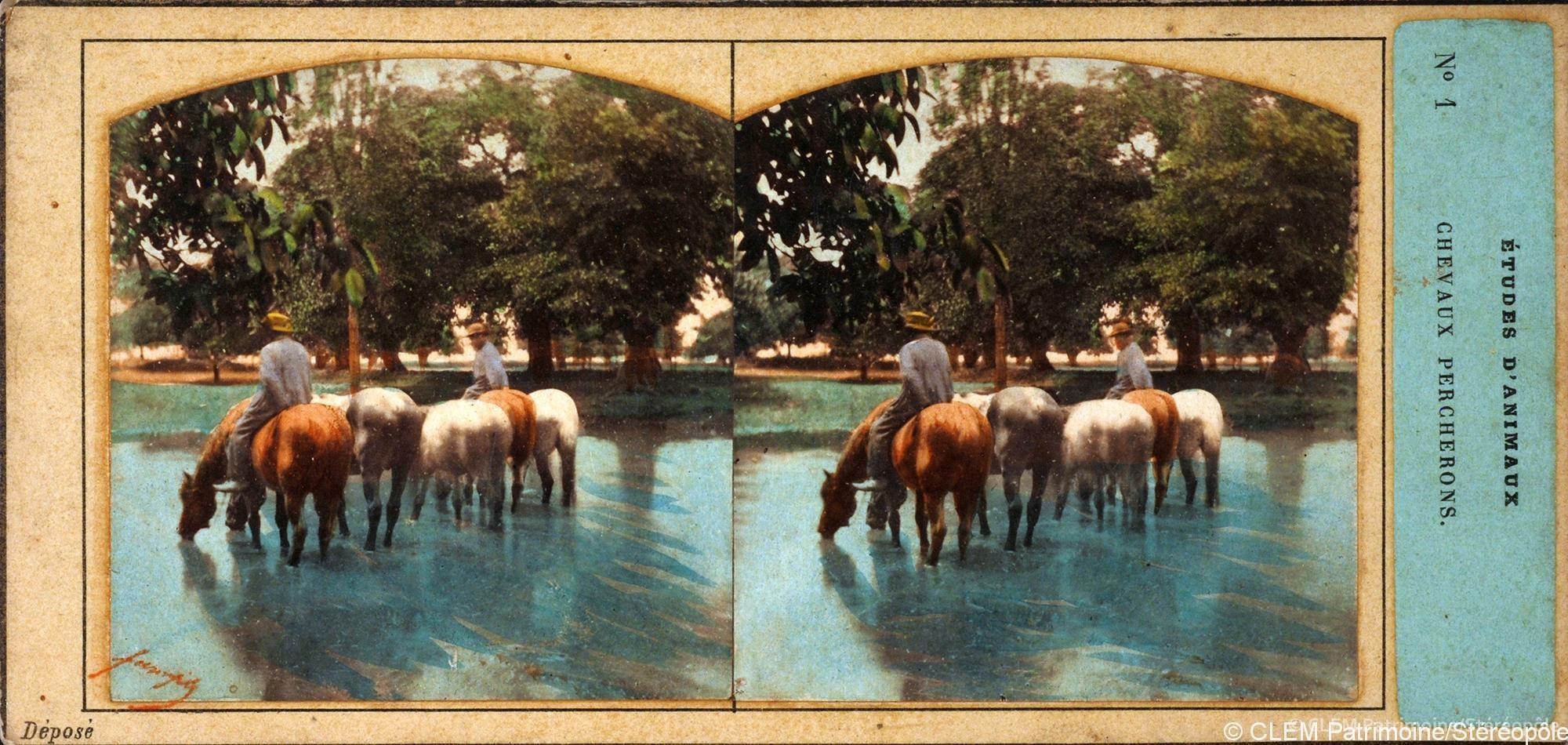 images stéréoscopiques chevaux Furne et Tournier