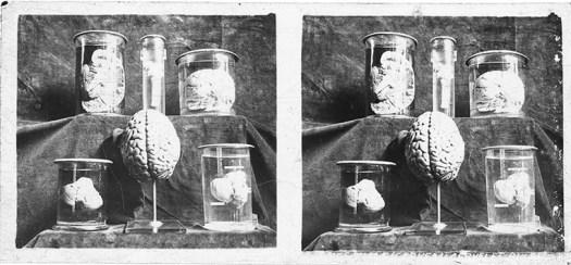 Images stéréoscopiques plaques de verre Educa Sciences