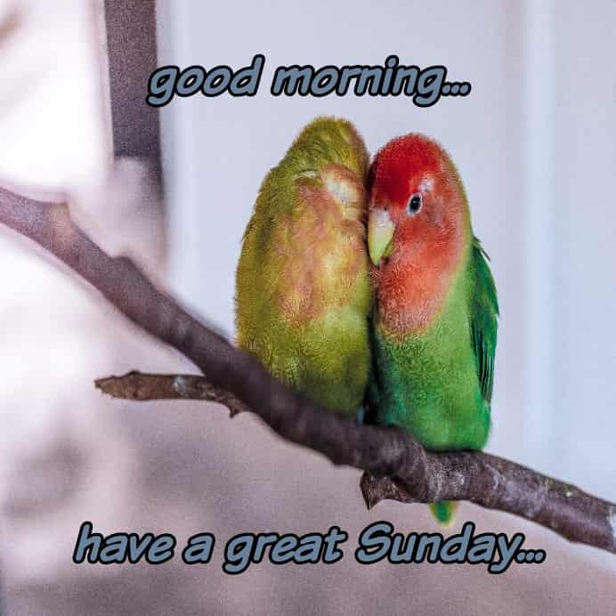 love birds with happy Sunday