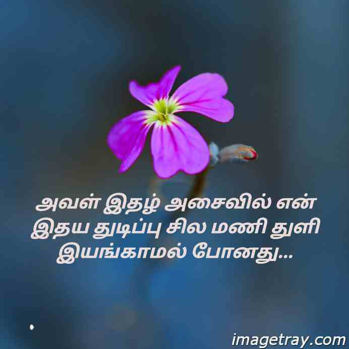 Tamil romantic WhatsApp DP