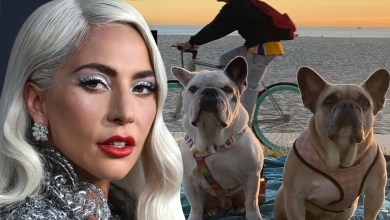 Lady Gaga's Alleged Dognappers Arrested for Attempted Murder, Robbery