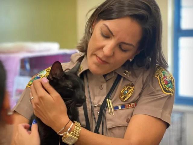 binx cat rescued