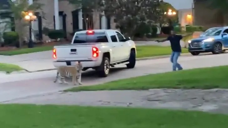 WATCH: Tiger On The Loose In Houston, Almost Gets Shot By Sheriff Neighbor!