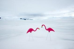 Pink_Flamingos_5