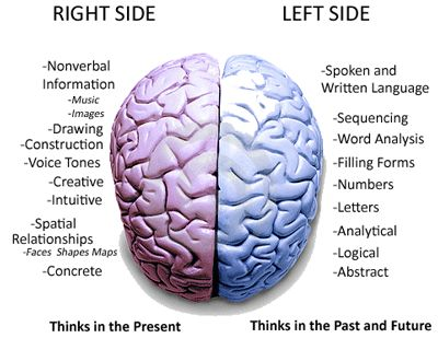 left side brain functions diagram opossum anatomy right facts and fantasies imaginate