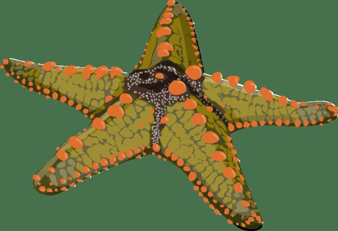 Rock-Pool-Star-Fish-Barry-Brunswick-Blog