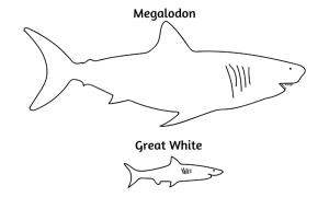 Barry-Brunswick-Fun-Facts-About-Sharks-Shark-Size-Comparison