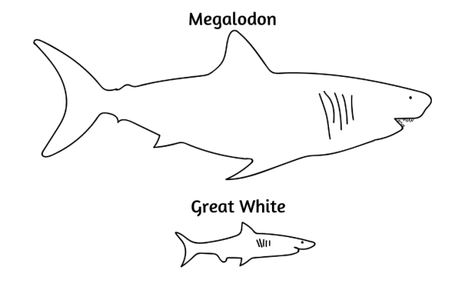Barry-Brunswick-Fun-Facts-About-Sharks-Shark-Size-Comparison