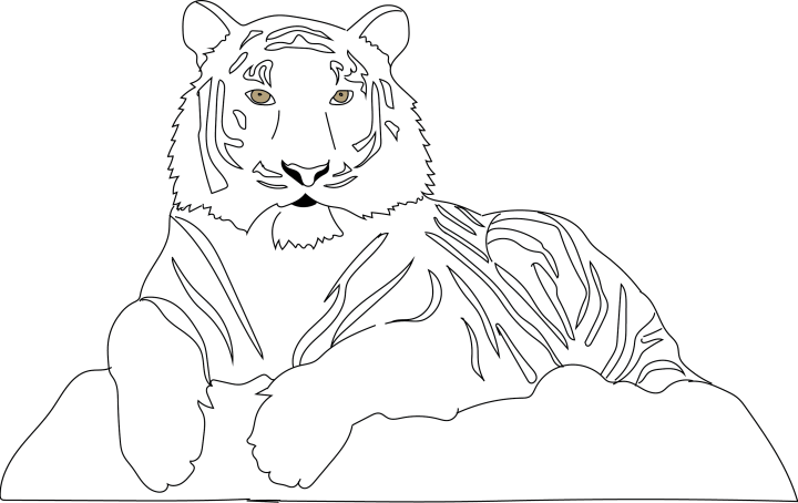 Tiger-Colouring-in-by-Barry-Brunswick (2)