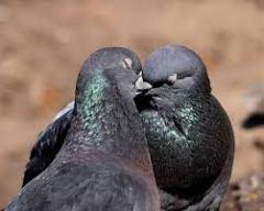 Post fight kisses