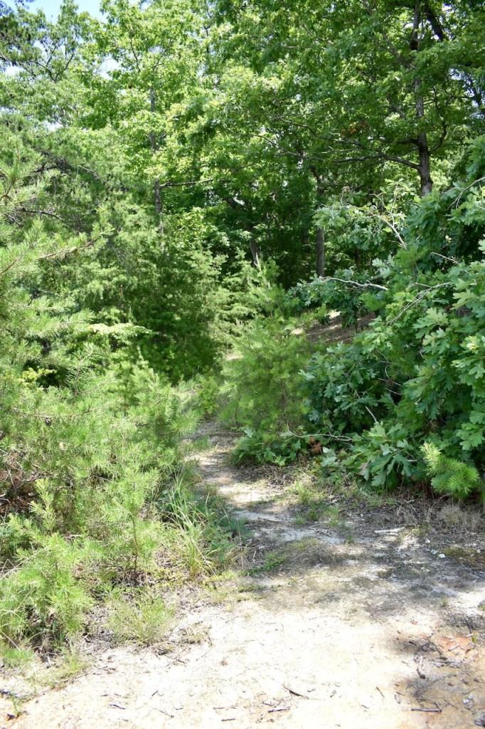 site 5 Duckett Mill Campground