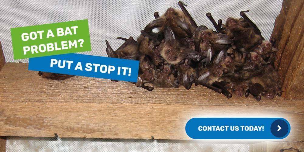 bats-control-removal
