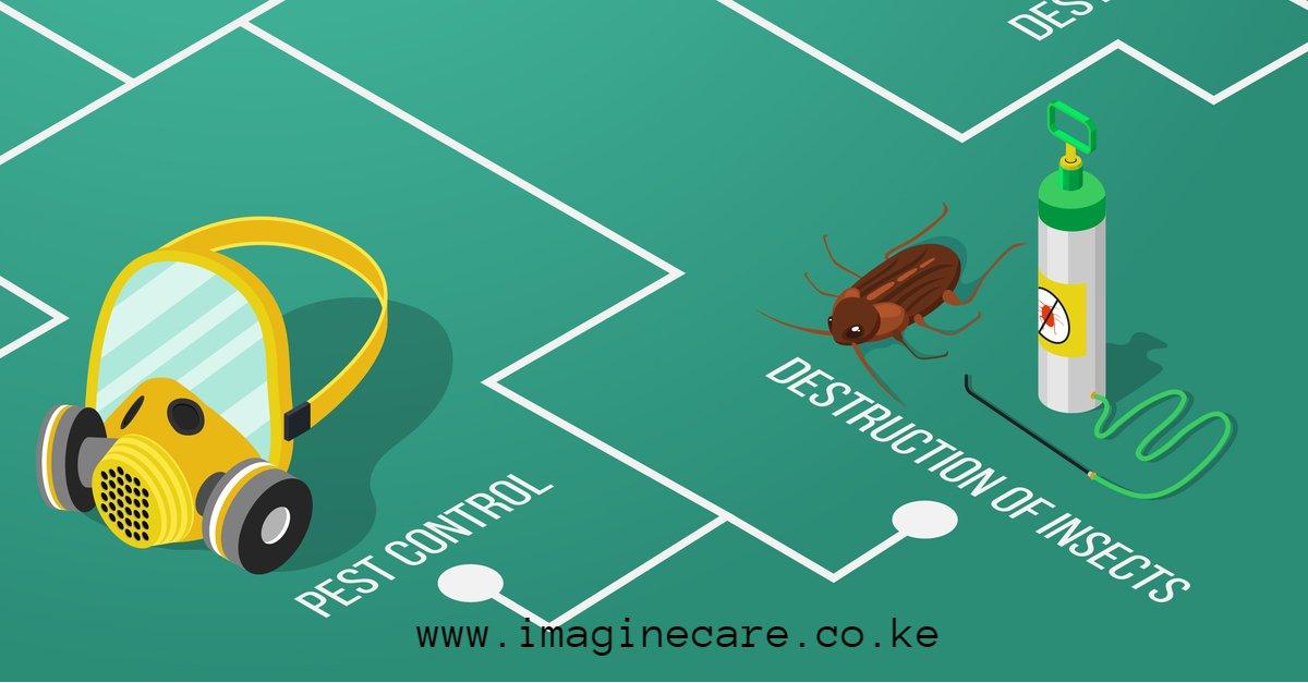 Cockroach Control in Nairobi