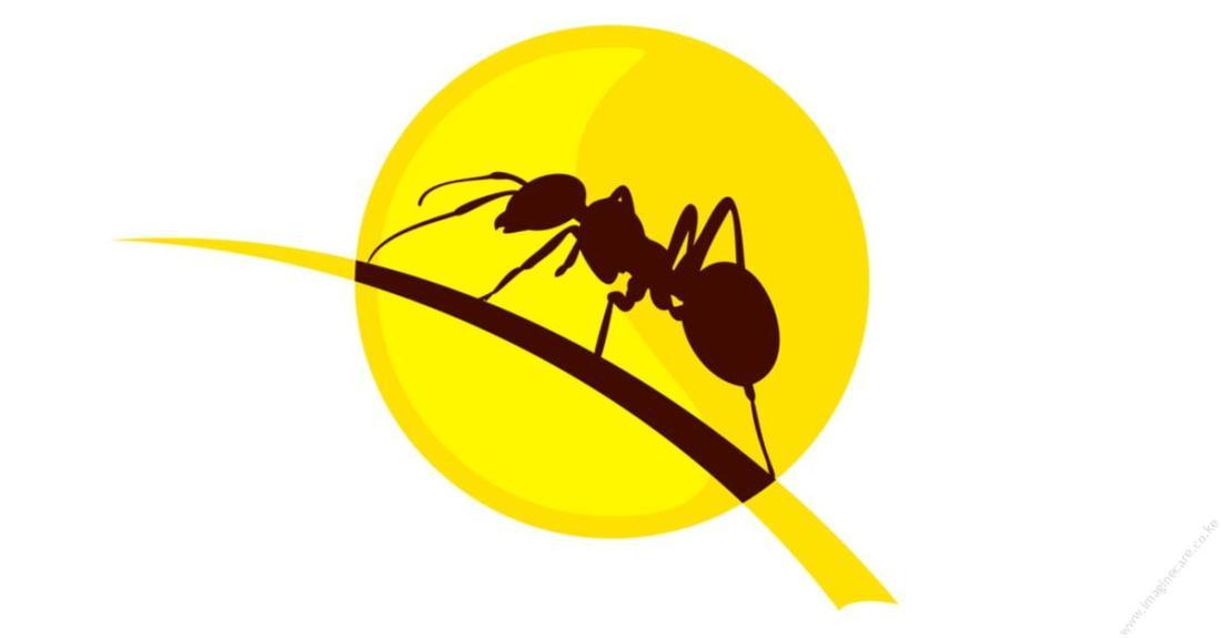 ant-killer-termidor