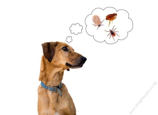 ectoparasites-flea-mites-ticks-lice