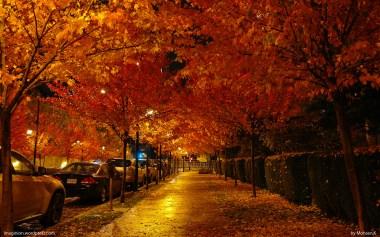 Fabulous Autumn