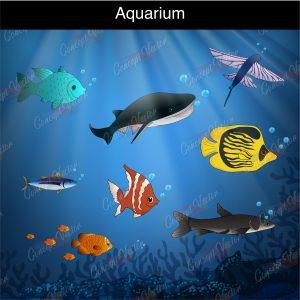 aquarium-fish-6-scaled