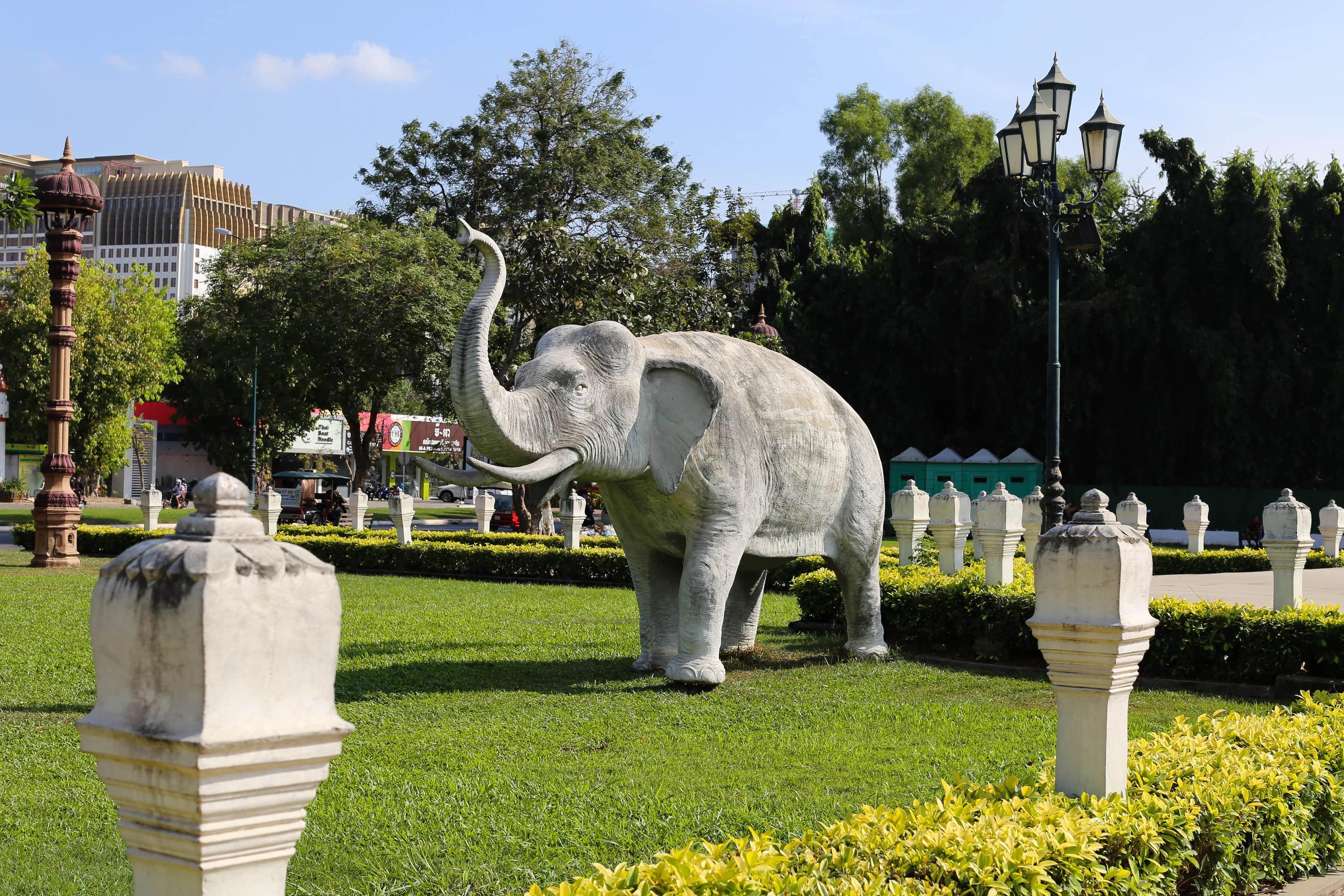 phnom penh elephant