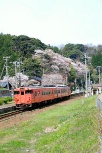 JR山陰本線鎧駅の桜