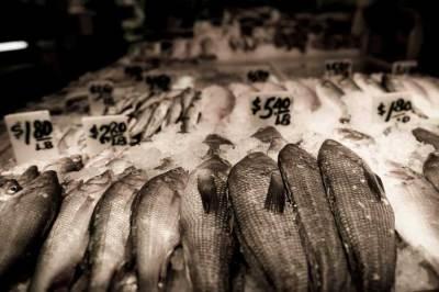 NY fish photo