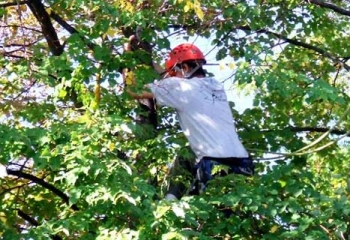 Tree Removal Mandeville |  Tree Removal  services
