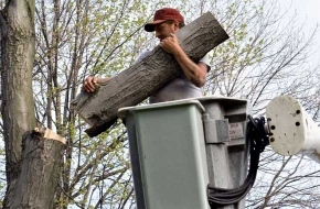 Tree Company In Conyers | Affordable Tree Removal Services
