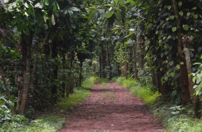 Coffee Estate for Sale