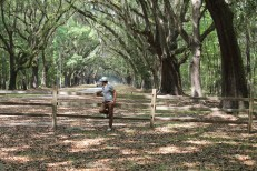 alex-miranda-actually-alessandro-savannah-georgia-wormsloe-historic-site-oak-avenue