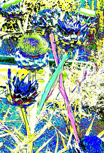 artwork blooms diagonals