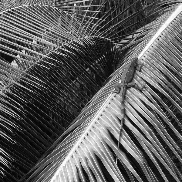 black and white photo Puerto Rico