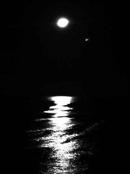 b and w photo of moonlight on Carribbean Sea