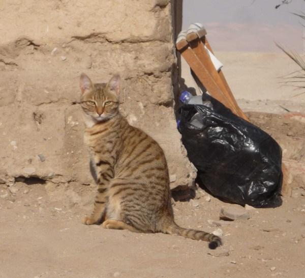 Dig Cat Imalqata - Joint Expedition