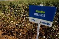 Dia-de-Campo-2011-CampoVerde-MT-5665