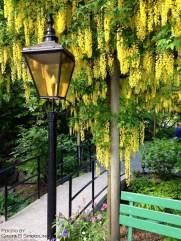 yellow.lightpost