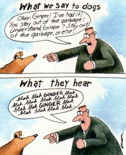 What donor hear