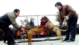 Peleas de perros