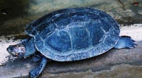 Nueva consulta sobre tortugas