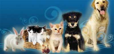 mascotas1.jpg
