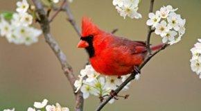 El canto en los pájaros
